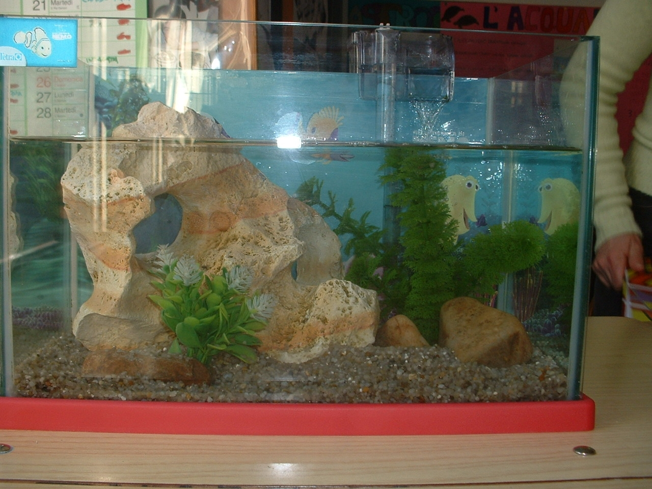 L 39 acquario in classe for Acquario con pesci rossi